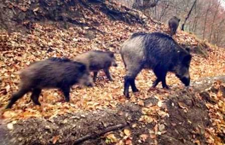 Avcılar Köylüye Destek Çıktı