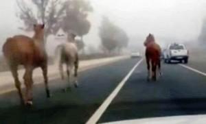 Esenboğa Protokol Yolunda Atlar Şaşırttı