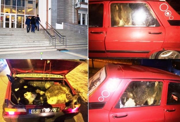 hayvan hirsizlari tutuklandi