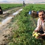 Akkuzulu'yu Dolu Vurdu Çiftçi Mağdur Oldu