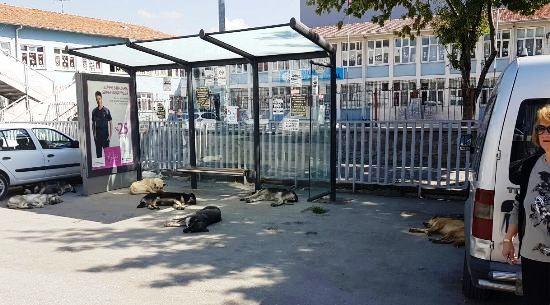 Köpekler Durakta Protesto Etti