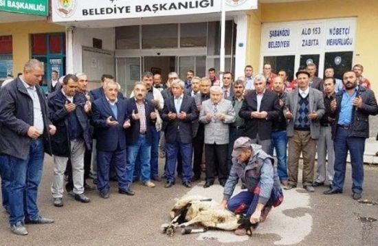 sabanozu-belediye-baskani-kurban