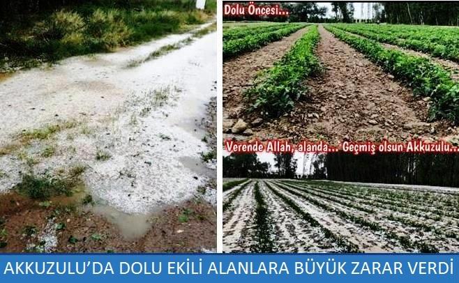 Akkuzulu'da dolu ekili alanlara büyük zarar verdi