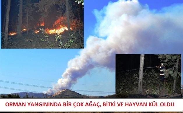 Orman yangınında bir çok ağaç, bitki ve hayvan kül oldu